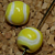 Tennis Ball Ceramic Beads (890)