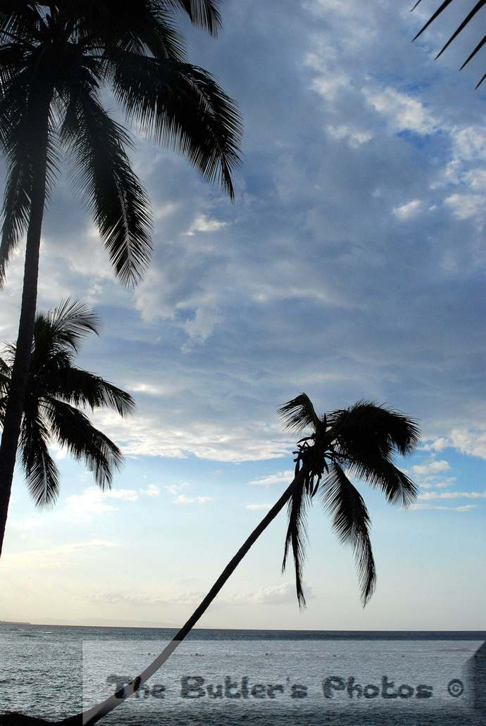 Palm Trees In A Storm Photograph, Palm Tree Photo, Fine Art Photograph,