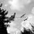 Birds In Flight Photo, Black and White Photograph, Nature Photograph, Home