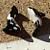 Large Orca Ceramic Beads