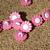 Pink Chrysanthumum Buttons