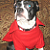 Superstar Dog Shirt Boston Terrier Red Fleece