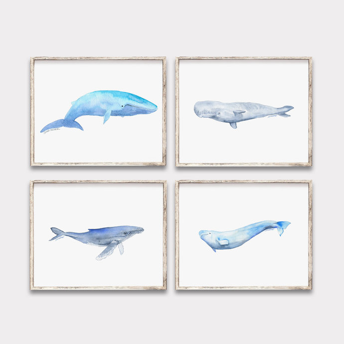Whale Variety Watercolor Art Prints - Blue Humpback Beluga Sperm Whales