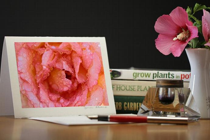 Photo Note Card - Dewy Rose