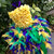 Mardi gras tutu dress pageant outfit of choice girls toddler feather bottom