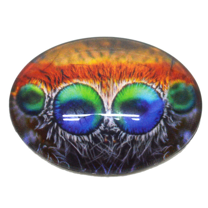 Single Oval Colorful Jumping Spider Eyes Cabochon Realistic Bug Insect Glass