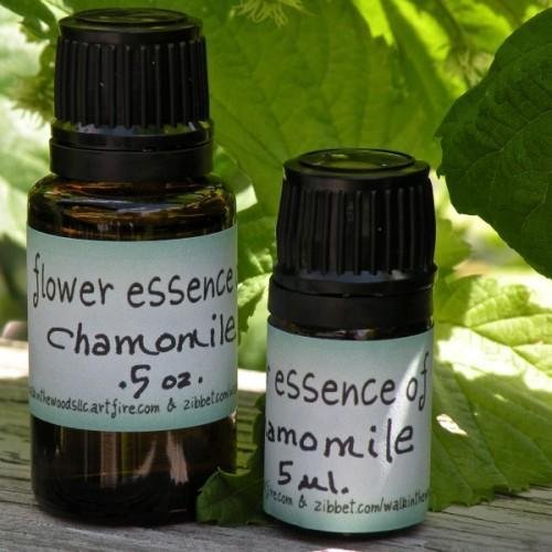 Chamomile Flower Essence - 5 ml. - Handmade