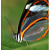 Butterfly Portrait 50x40cm Stretch Canvas Print