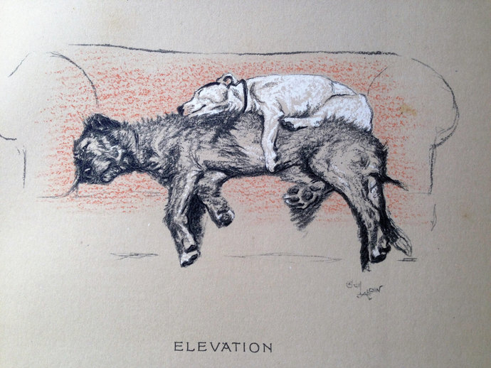BULL TERRIER Irish Wolfhound Signed mounted 1920 circa Cecil Aldin dog plate