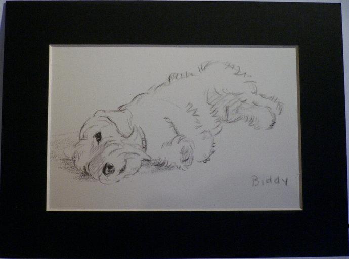 SEALYHAM TERRIER 1946 Lucy Dawson Mac Biddy terrier Vintage mounted dog plate