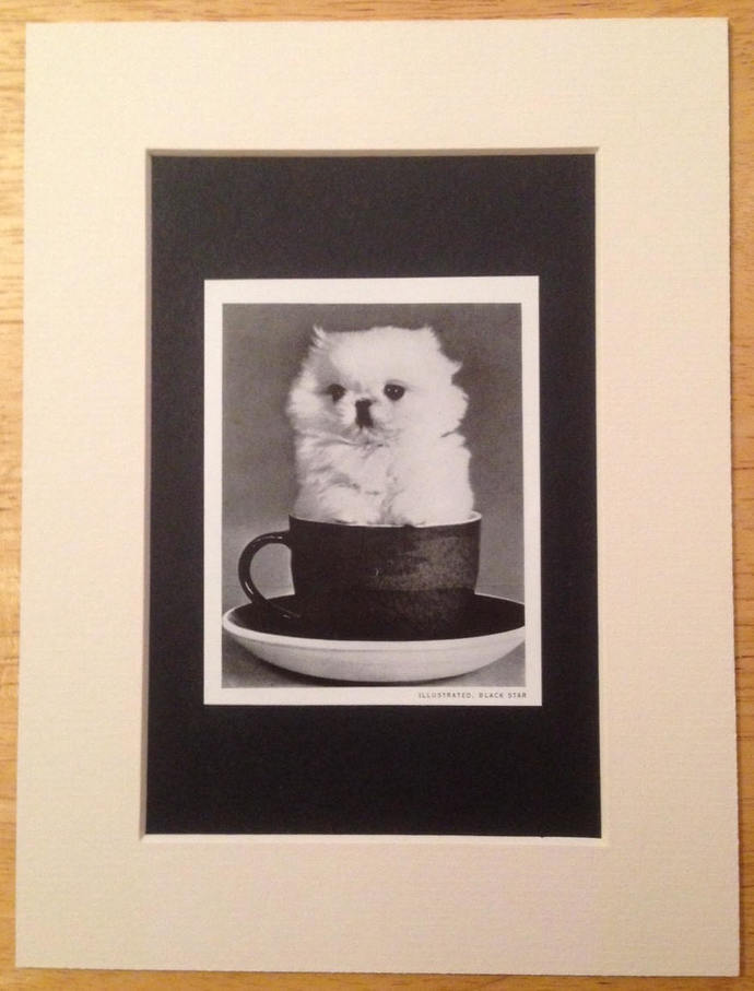 TOY WHITE PEKINGESE Dog Vintage Mounted 1958 original dog plate print Unique