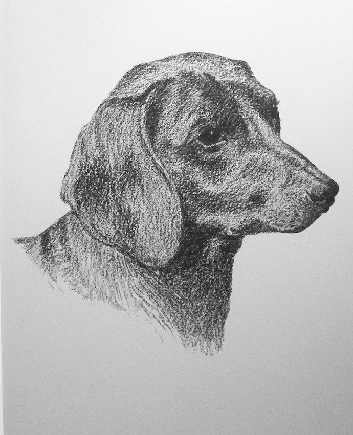 1935 Dachshund smooth haired dog C Francis Wardle 1935 Vintage original mounted