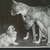 PEKINGESE AND BOXER Dogs Vintage Mounted 1958 original dog plate print Unique