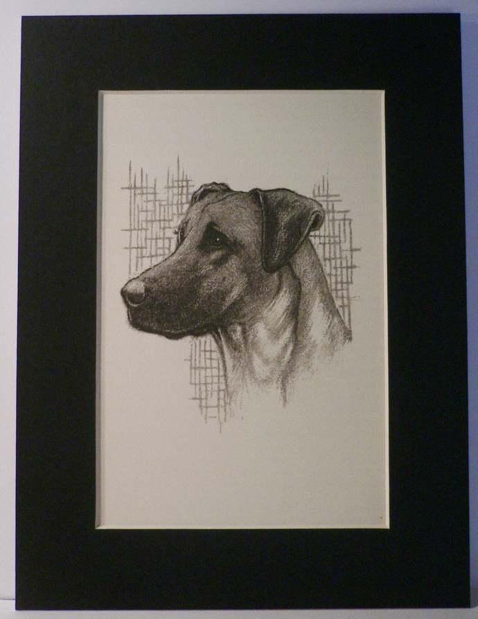 1949 Brutus GREAT DANE dog Vintage original C Francis Wardle bookplate dog print