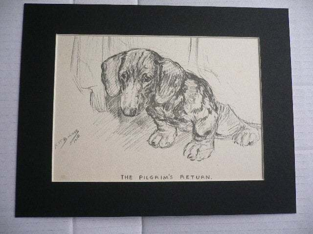Dachshund puppy dog VINTAGE K F Barker 1937 mounted dog plate print Unique