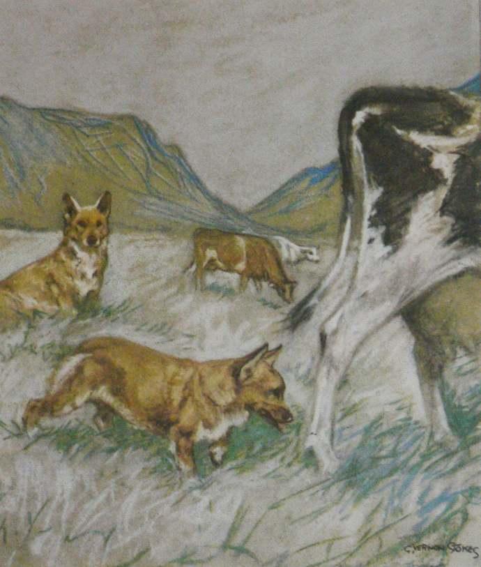 1947 CORGI dog Vintage signed original Vernon Stokes mounted dog bookplate print