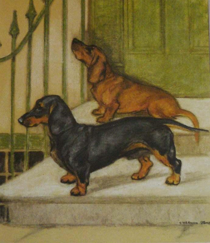 1947 DACHSHUND dog Vintage signed original Vernon Stokes mounted dog bookplate