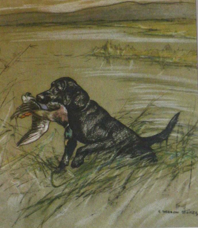 1947 LABRADOR Vintage signed original Vernon Stokes mounted dog bookplate print