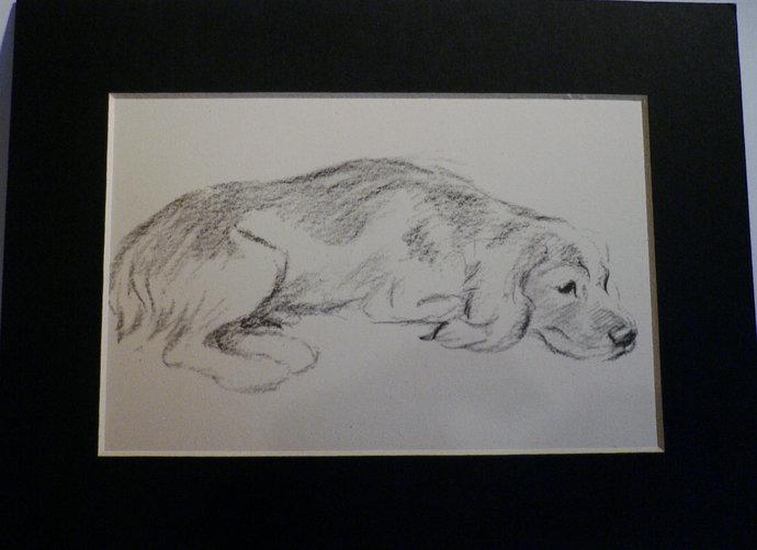 ENGLISH SETTER DOG Vintage mounted 1946 Lucy Dawson setter dog plate print