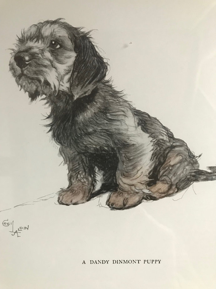 Dandy dinmont terrier Signed mounted 1930s Cecil Aldin puppy dog plate print