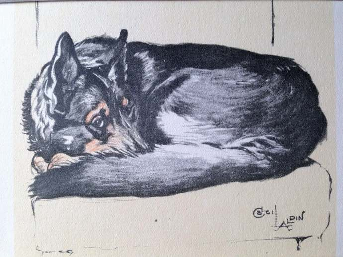 ALSATIAN GERMAN SHEPHERD signed mounted vintage 1928 Cecil Aldin dog plate print