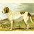 ST BERNARD Dog ANTIQUE Chromolithograph Dog Print 1881 by Vero Shaw Cassells and