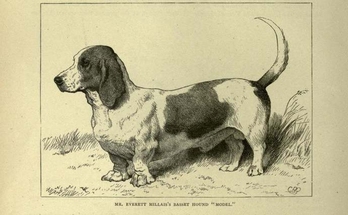 BASSET HOUND Dog ANTIQUE Dog Print Page plate c1881 by Vero Shaw Cassells and