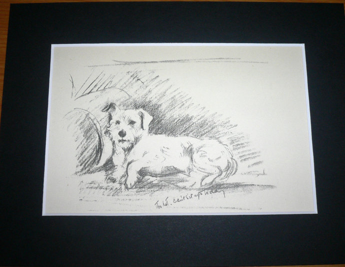 JACK RUSSELL TERRIER Dog pup Vintage Mounted 1936 'Mac' Lucy Dawson terrier dog