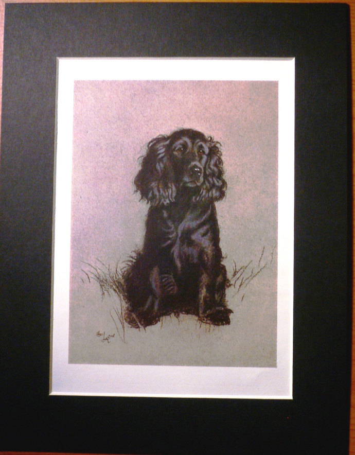COCKER SPANIEL DOG Signed mounted 1928 Cecil Aldin Spaniel dog plate print