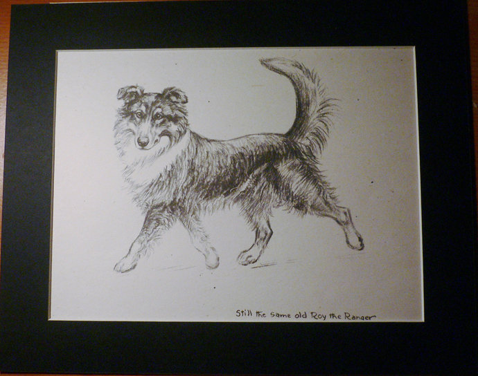 COLLIE Dog VINTAGE K F Barker 1933 Tricolour Collie mounted dog plate print