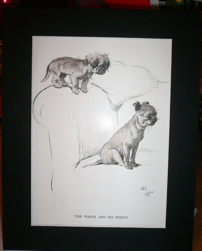 SALE Pug Parakeet Signed mounted 1930s Cecil Aldin -Pimple and his friend dog