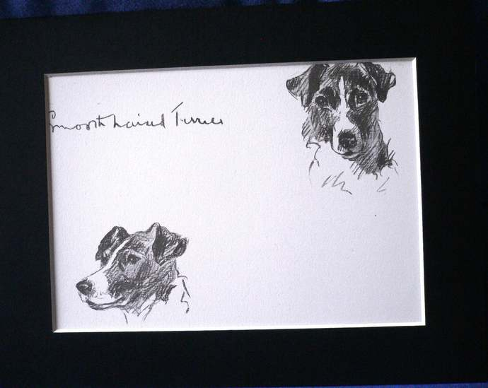 Vintage Mounted 1937 'Mac' Lucy Dawson Judy  Smooth haired terrier dog