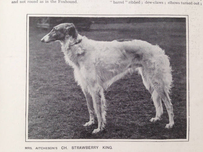 BORZOI Russian WOLFHOUND Antique Dog lithograph print 1907 Robert Leighton dogs