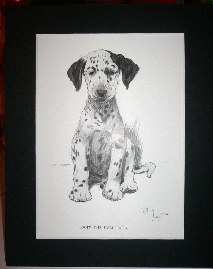 1930 Dalmatian dog Signed Cecil Aldin mounted dog plate print Unique Rare