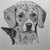1935 BEAGLE HOUND DOG Vintage original C Francis Wardle mounted bookplate print