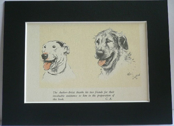 Bull terrier Irish Wolfhound Signed mounted vintage 1928 Cecil Aldin dog plate