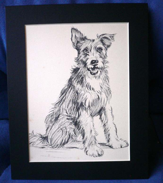 Vintage mounted 1939 Lucy Dawson Corky terrier American film star dog sitting