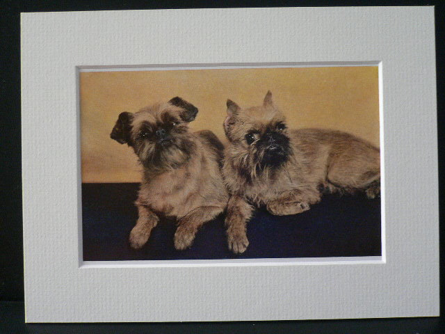 BRUSSEL GRIFFON TERRIER Dogs Vintage Mounted 1958 terrier dog plate print Unique