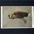 HUNT HOUND DOG Signed mounted 1928 Cecil Aldin Hunting hound dog plate print