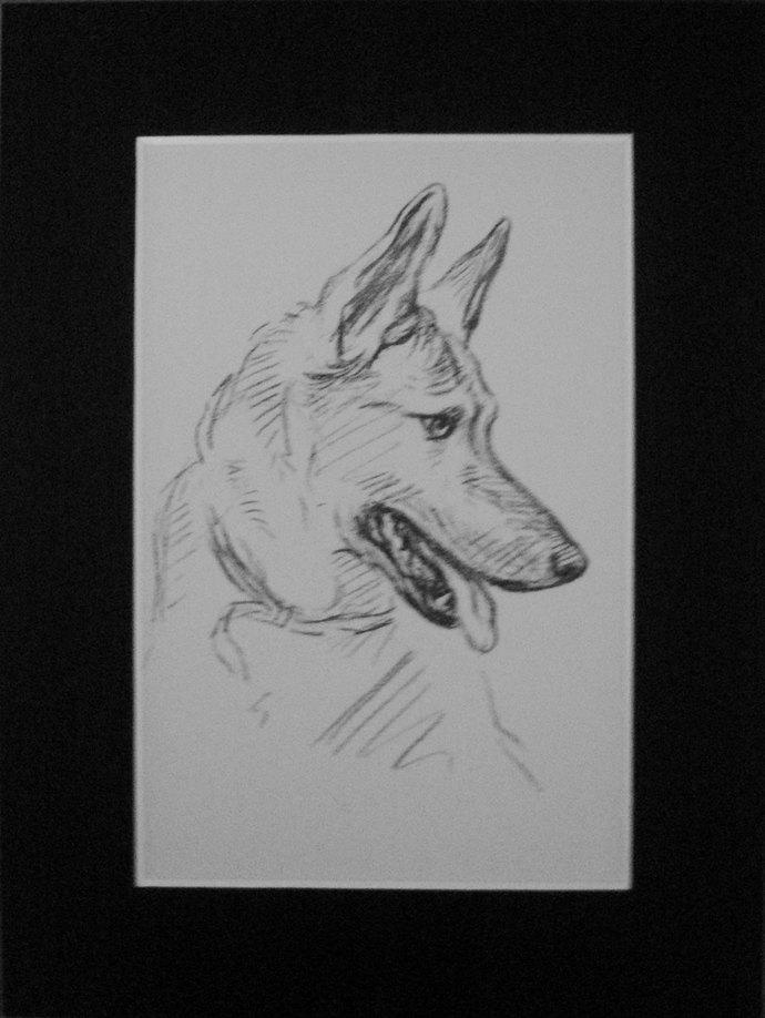 Alsatian German shepherd Vintage Mounted 1936 'Mac' Lucy Dawson dog plate print