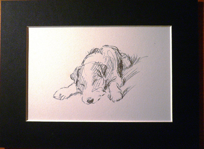 Vintage Mounted 1937 'Mac' Lucy Dawson Wire haired terrier sleeping dog
