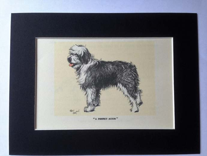 BOB TAILED Sheep DOG Signed mounted 1928 Cecil Aldin Collie dog plate print