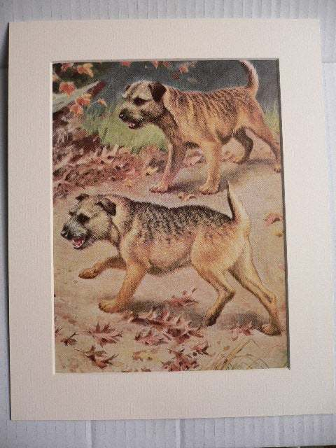 BORDER TERRIER Dogs Vintage Mounted 1958 terrier dog plate print Unique Thank