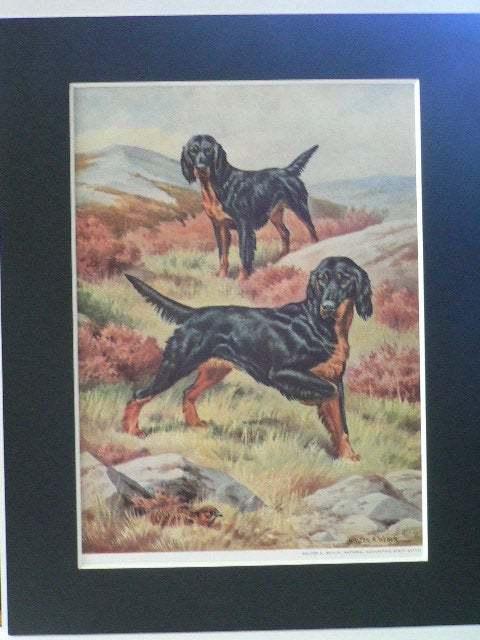GORDON SETTER Dogs Vintage Mounted 1958 Walter A Weber dog plate print Unique