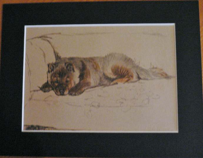 CHOW CHOW PUPPY Vintage mounted 1935 Cecil Aldin Chow chow puppy dog relaxing on