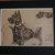 Scottie SCOTTISH TERRIER DOG Vintage mounted 1935 Cecil Aldin scottish terrier