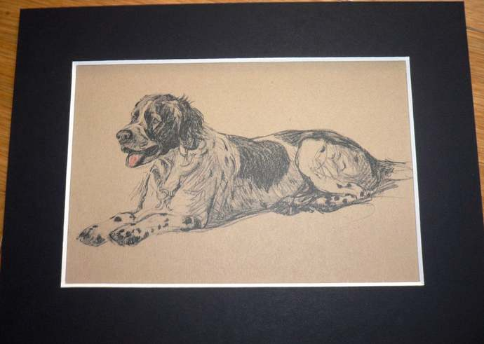 SETTER DOG PRINT Vintage mounted 1935 Cecil Aldin Setter puppy dog plate print