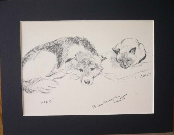 SHEEPDOG and SIAMESE cat SIGNED mounted 1939 Lucy Dawson Mac dog plate print