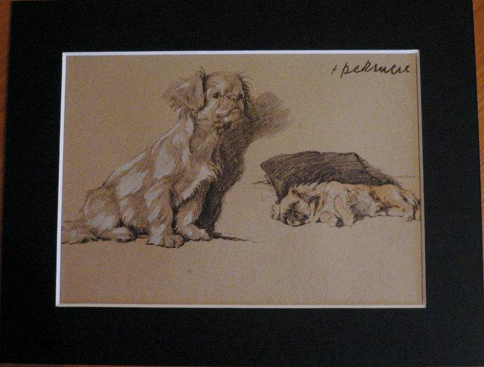 PEKINGESE DOGS Vintage mounted 1935 Cecil Aldin  Pekingese Pekinese peke dog