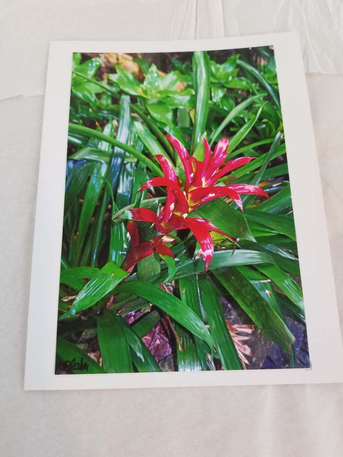 Greeting Card * Personalized Text * Bromeliad Plant * Photo Card * Blank Card